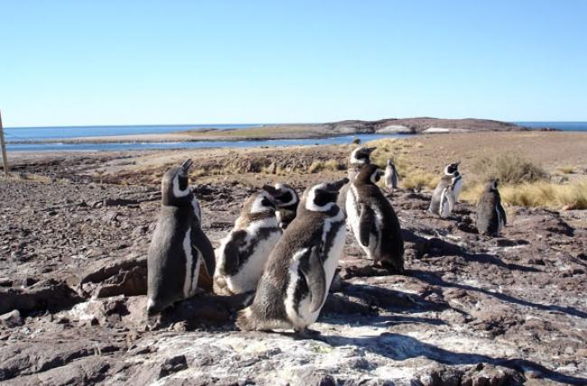 MISTICA RUTA 40 - Puerto Madryn a El Calafate