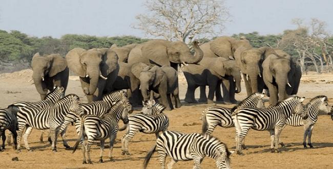SUDAFRICA, SALIDA GRUPAL