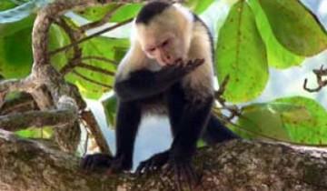 COSTA RICA PLAYAS Y VOLCANES